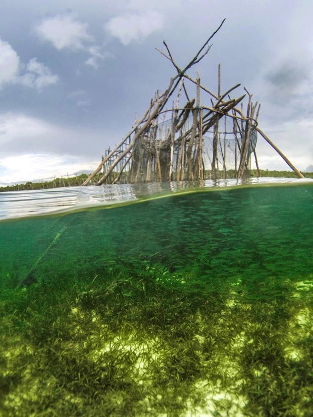 De manier waarop traditionele vissers in Indonesië de laatste jaren werken, zorgt voor overbevissing en schade aan de kust.  Dat concluderen Britse onderzoekers in Nature Communications na analyse van de vismethoden op het eiland Kaledupa, ten zuidoosten van Sulawesi   (Benjamin Jones)
