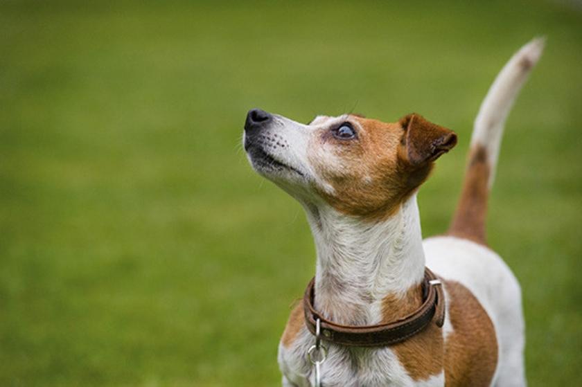 Ingezonden brief: Voor mij geen leven zonder hond  (anp / Piroschka van de Wouw)