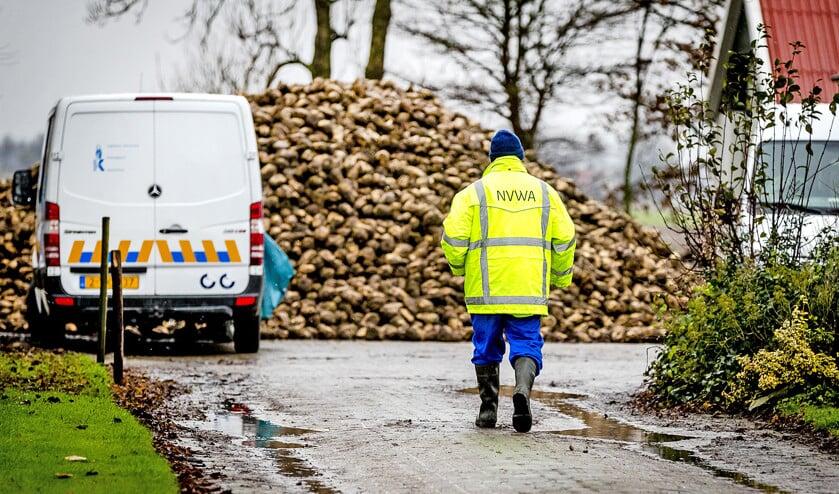Bij een eendenbedrijf in Biddinghuizen worden vleeseenden geruimd.  (anp / Remko de Waal)