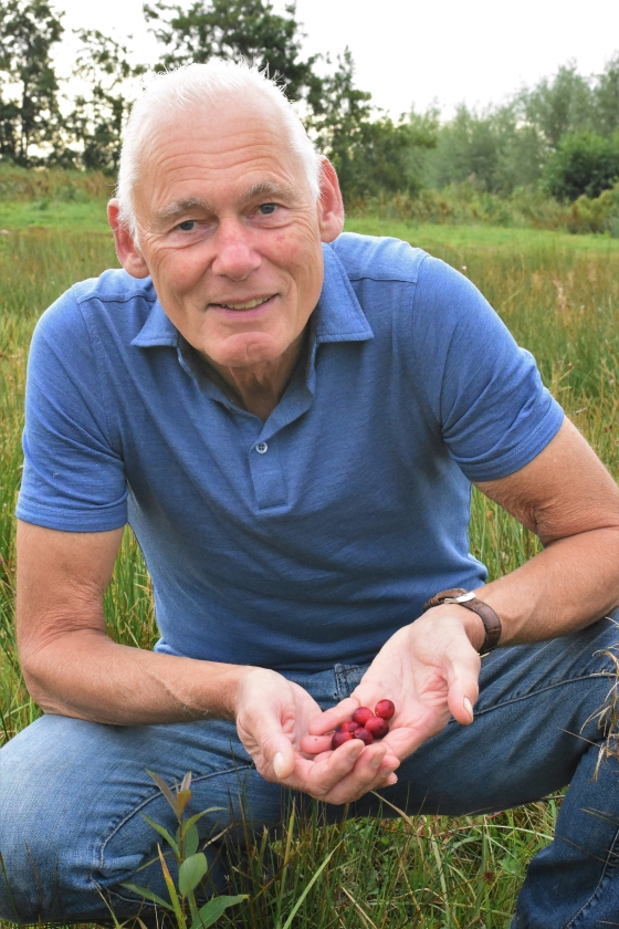 Bart Crouwers teelt cranberry's in de Krimpenerwaard.   (Theo Haerkens)