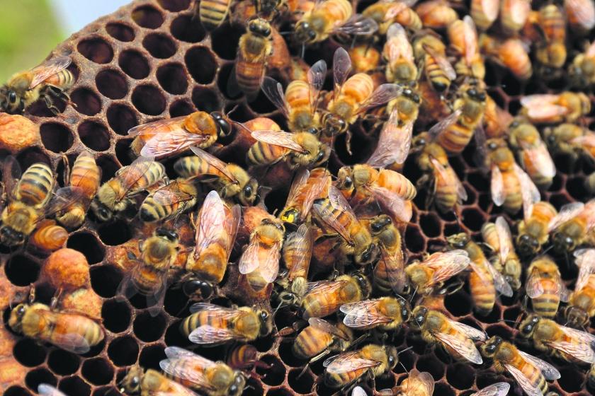 Werkbijen blijven actief.
