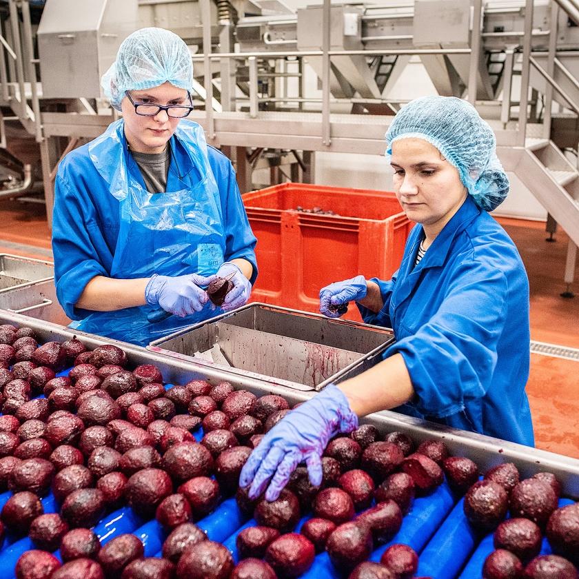 Werknemers controleren de bieten op eventuele imperfecties.   (Simon Lenskens)