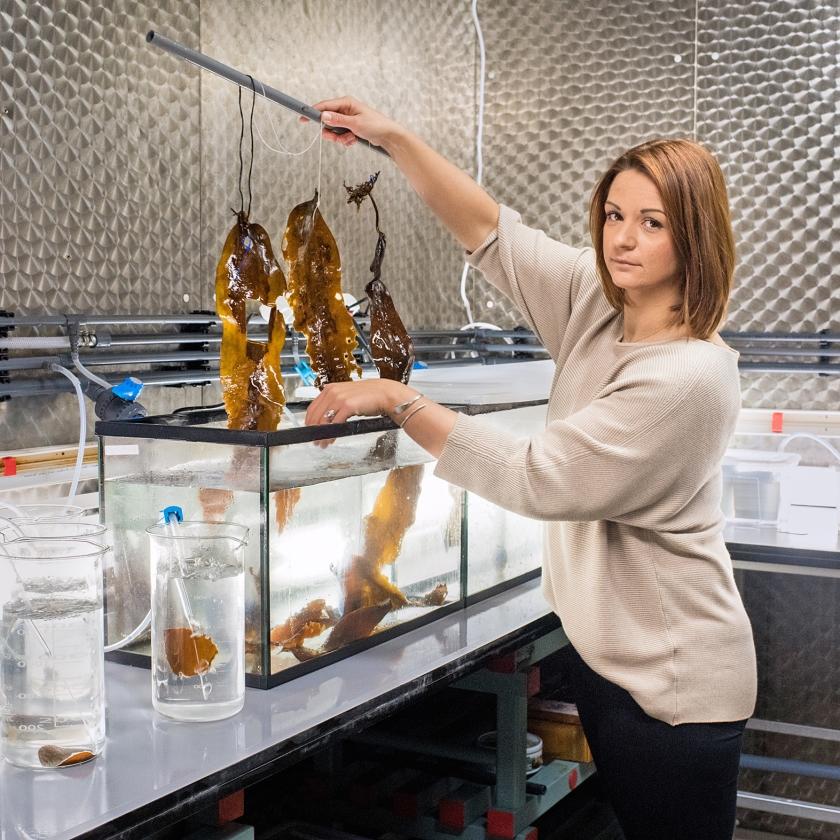 Een medewerkster laat zeewier zien in het lab.   (Simon Lenskens)