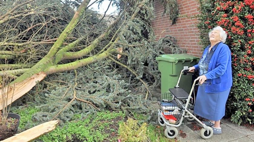 De 88-jarige vrouw uit Almere kijkt naar haar getroffen boom.  (omroep flevoland)