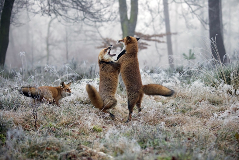 Voorkeur: Wild op de Veluwe