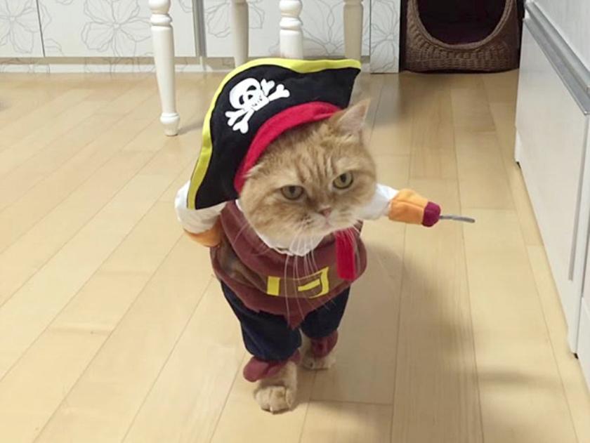 Viral: Een internet zonder katten  (nd)