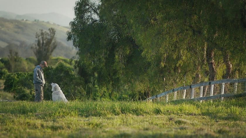 Als kijker waan je je in het paradijs bij het zien van The biggest little farm  (cinemien)