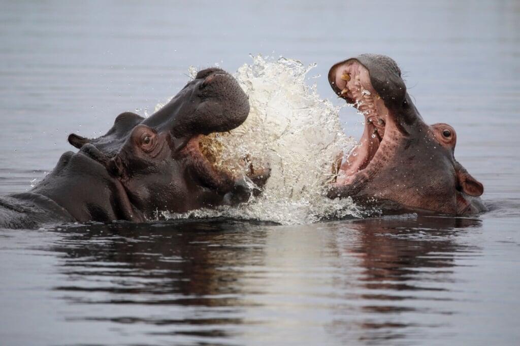 beeld The Natural History Film Unit Botswana